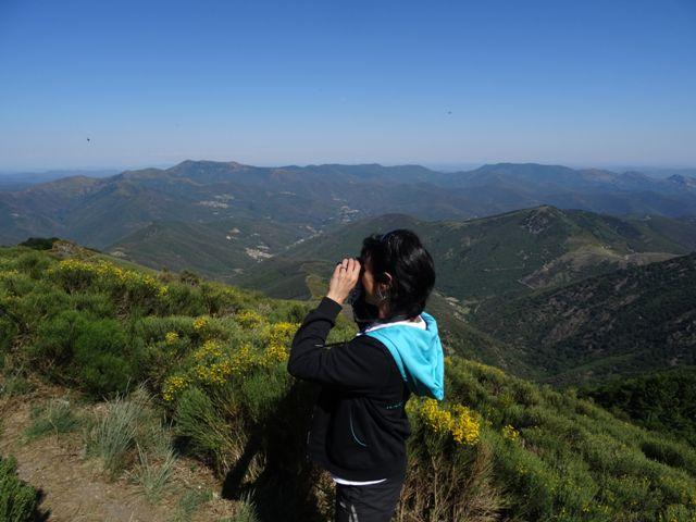 Randonnée dans le Parc National des Cévennes sentier d'interprétation mouflons