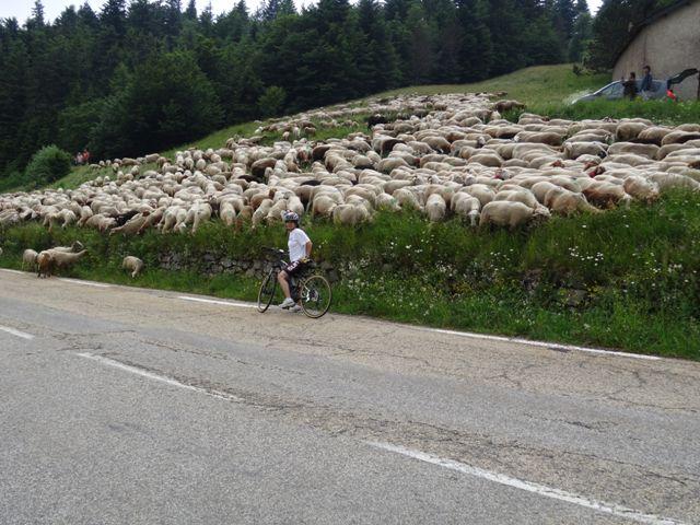 transhumance Aigoual vélo