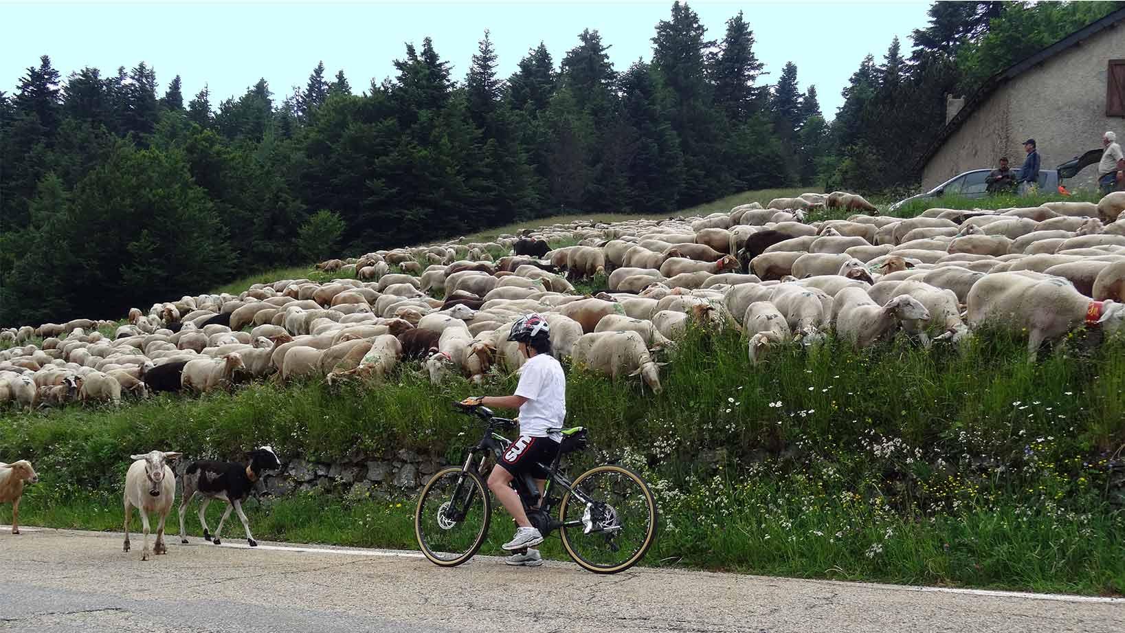 Vélo et cyclotourisme sur le massif de l'Aigoual